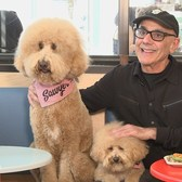 Doodles Visit New York City's First Dog Cafe