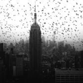 Birds and Empire State Building, Midtown, Manhattan