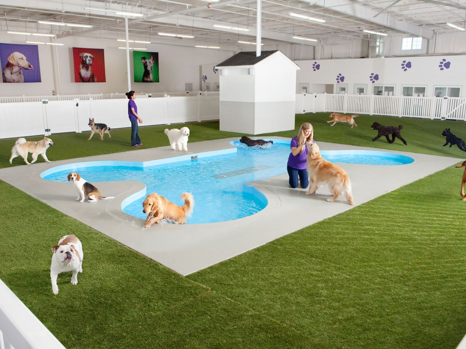 This undated artist rendering courtesy of ARK Development shows Paradise 4 Paws, a holding area for dogs in a new luxury animal terminal planned for New York's JFK Airport.