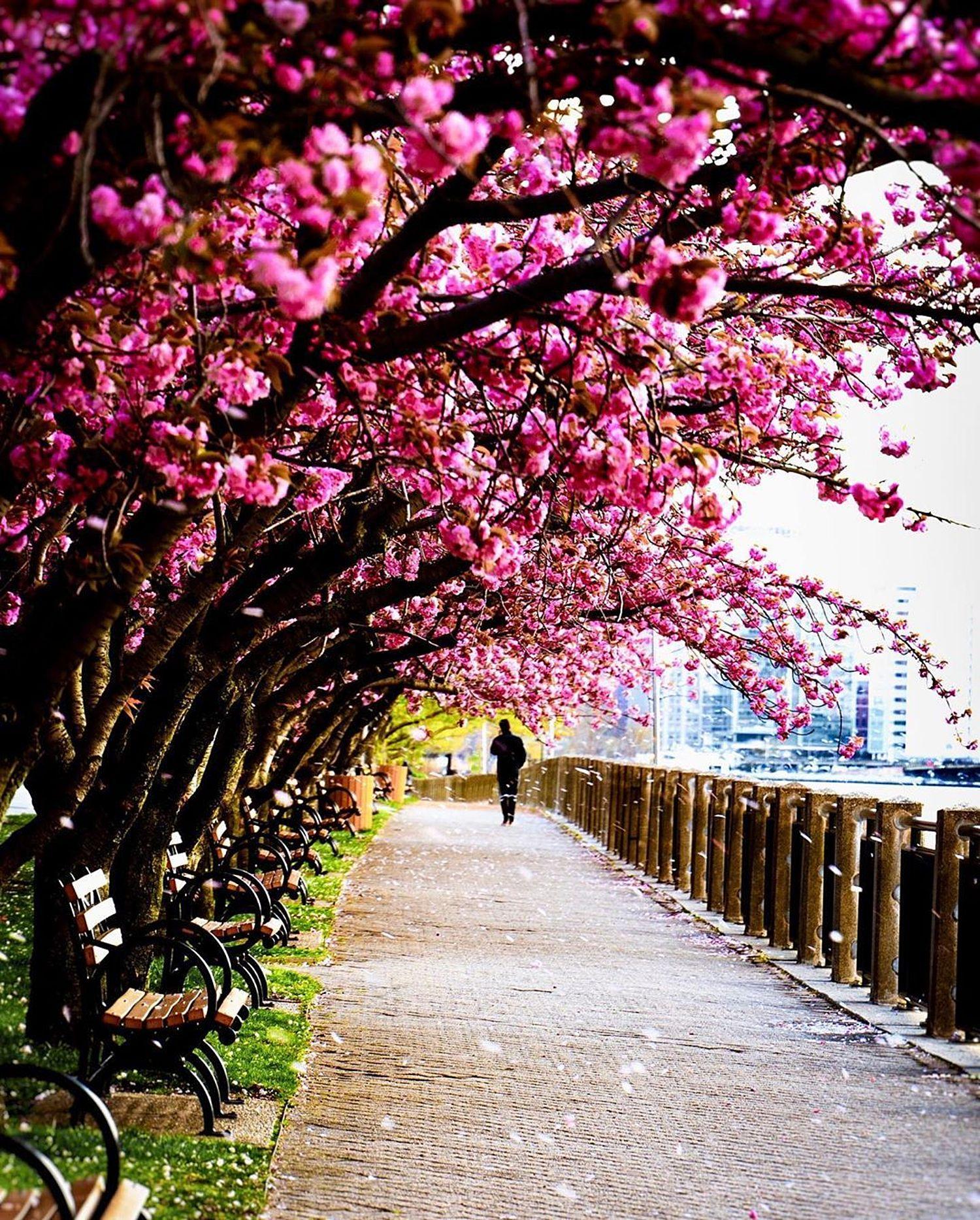Roosevelt Island, Manhattan