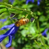Bryant Park bee