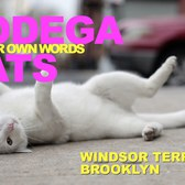 Bodega Cats In Their Own Words: Snowball of Windsor Terrace, Brooklyn