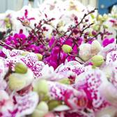 The Orchid Show 2016: Orchidelirium is Coming!