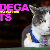 Bodega Cats In Their Own Words: Wolverine