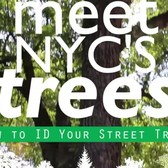 Meet NYC's Trees: Green Ash