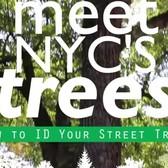 Meet NYC's Trees: Green Ash