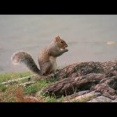 'Squirrel Census' aims to count every squirrel in Central Park.  Seriously.