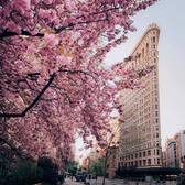 Madison Square Park and Flatiron Building, Manhattan
