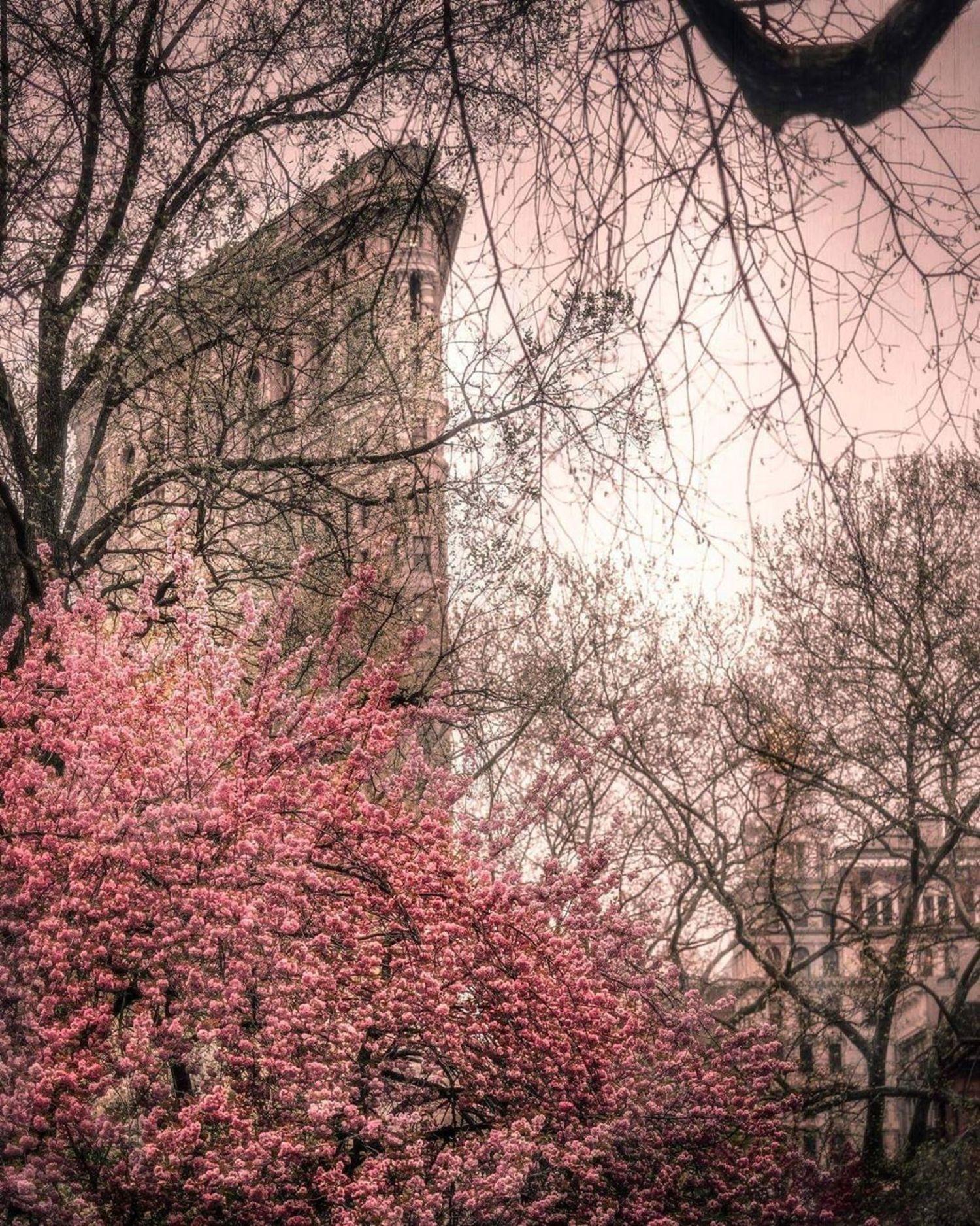 Flatiron Building from Madison Square Park, Manhattan