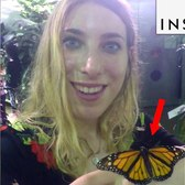You can get covered with butterflies in the middle of NYC