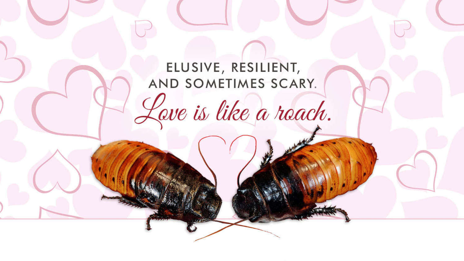 Elusive, Resilient, and Sometimes Scary. Love is Like a Roach.