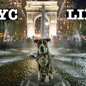 NYC LIFE: WALKING UNION SQUARE TO WASHINGTON SQUARE PARK