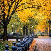 Central Park Mall, Central Park, Manhattan