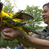 Birds In Flight Show | Bronx Zoo
