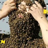 20000 bees swarm our Manhattan skyscraper