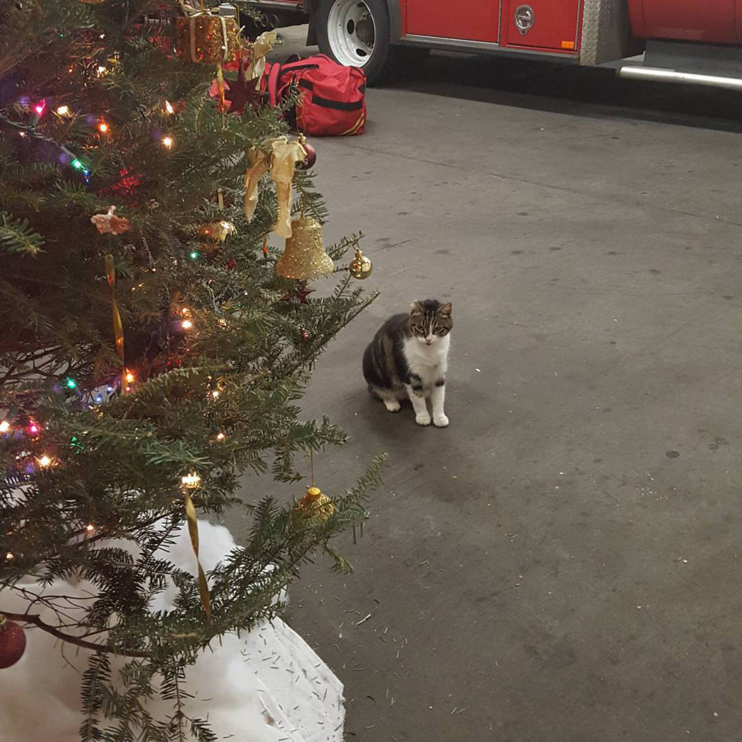 The day after Christmas and all of my shiny new toys have been carefully tossed into their respective hiding places. I hope your holidays were equally successful!  #whowillretrievethemformenow  #merrychristmas /#happyholidays #mytoys #cats #catsofinstagram #station57 #kitty #meow