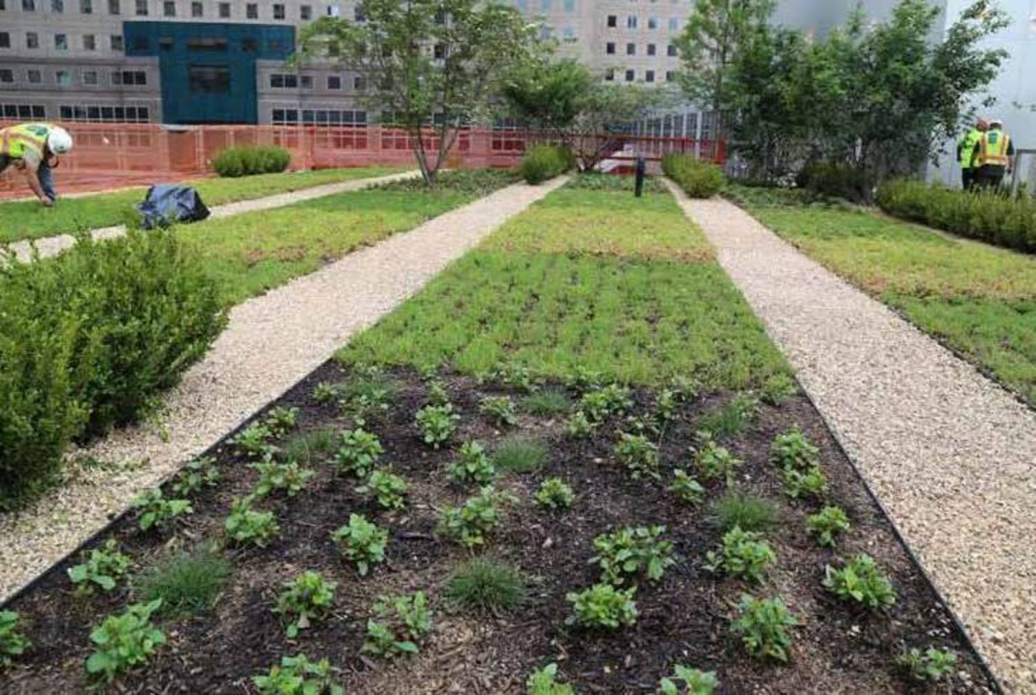 Planting Continues at Park Level of WTC Liberty Park