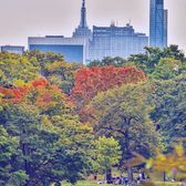 Autumn in Central Park, Manhattan