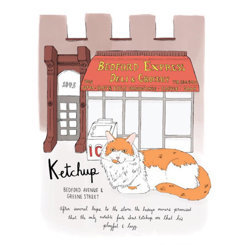 Ketchup // Bed-Stuy #brooklynbodegacats #brooklyn #bodegacats #bodegacatsofinstagram #catsofinstagram