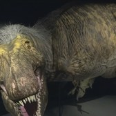 New T-Rex Exhibit At Museum Of Natural History