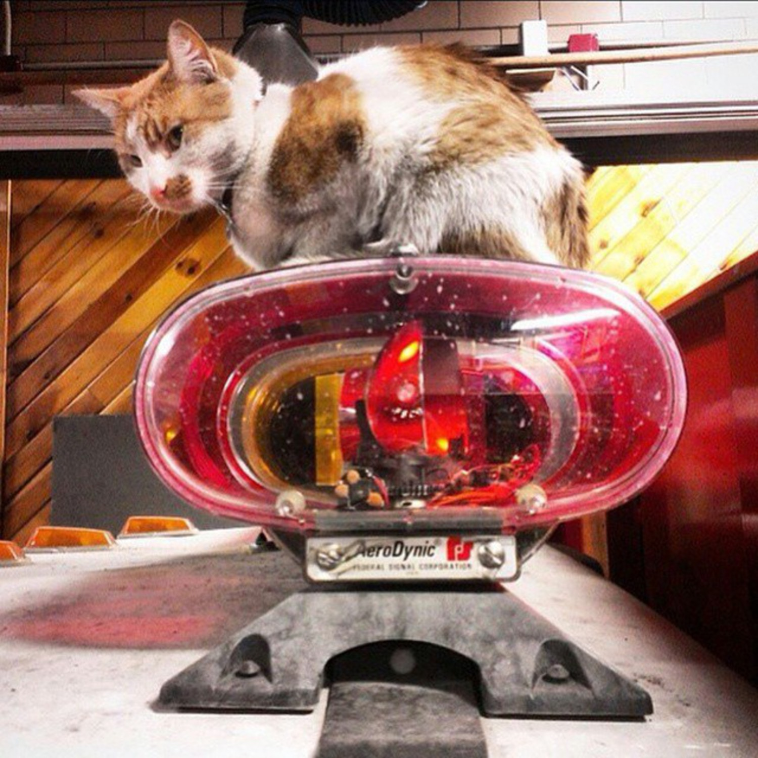 It may be Monday morning but my meowutual partner @carlow_fdny_cat is always ready to go lights and sirens #alwaysready #beeeeeepbooooop #catsgo