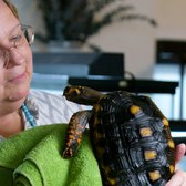 Meet Manhattan's Turtle Lady