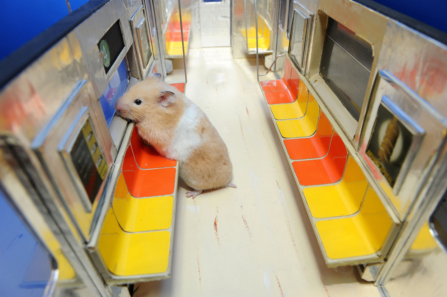 """Edie's Big Adventure 04 