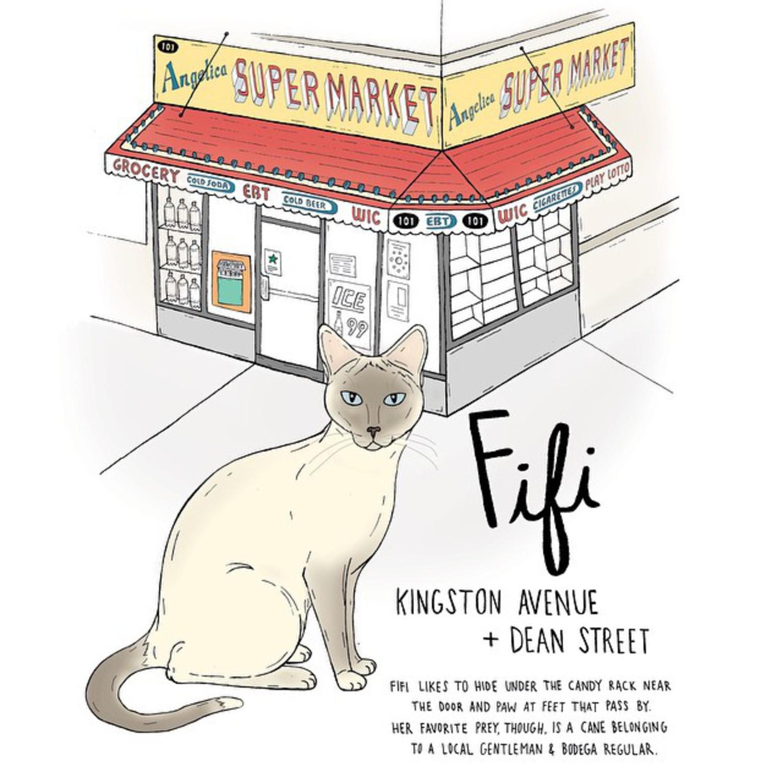 Fifi // Crown Heights #crownheights #brooklyn #brooklynbodegacats #bodegacatsofinstagram #catsofinstagram  #bodegacats