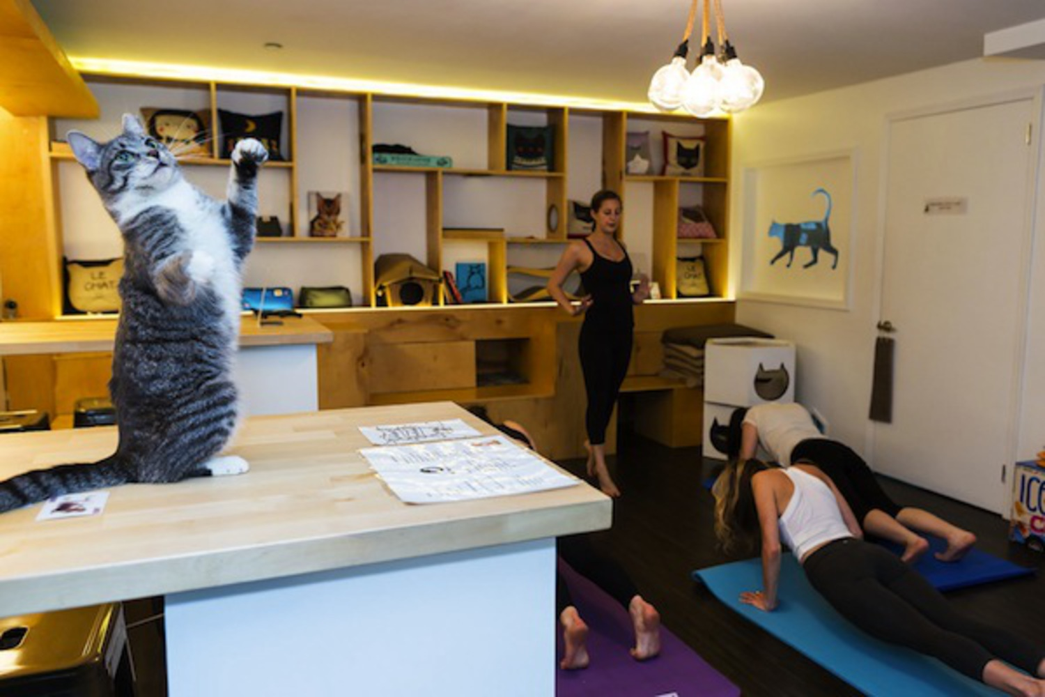 NYC's Only Cat Cafe Unleashes Kitty Yoga Classes