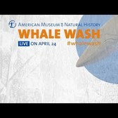 Watch the Whale Wash Live!