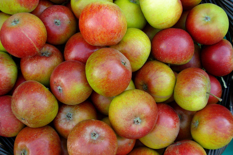 Apples   Waterperry Gardens Apple Festival