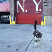 No wait , don't go. Someone needs to stay here and feed me snacks. #station57 #workingcats #stationcat #cats #kitty #catsatworknyc #catsofinstagram #snacks