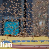 20,000 bees swarm a New York City hotdog stand