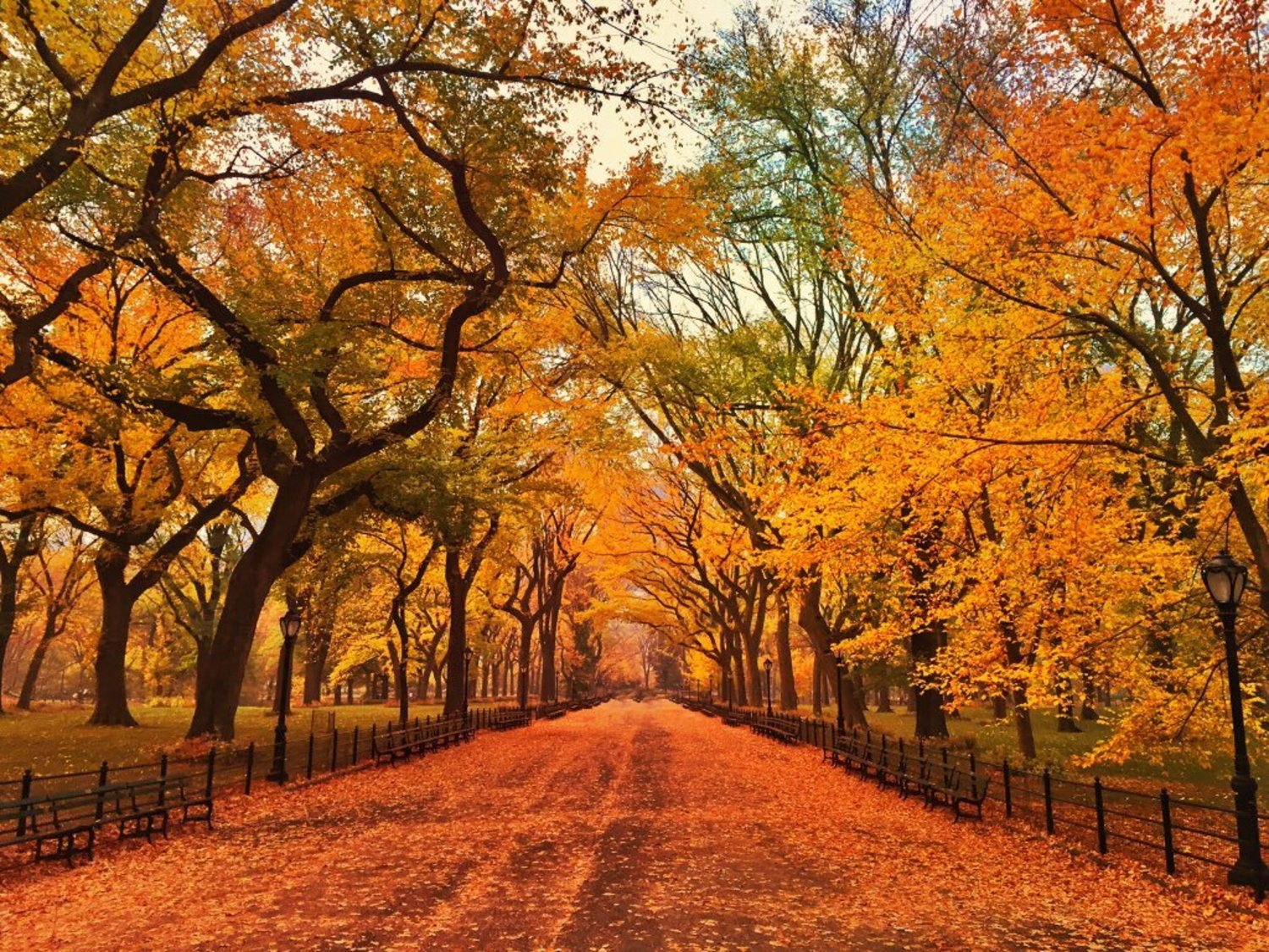Fall in Central Park's mall #NYC https://t.co/qwGPRF9ba4