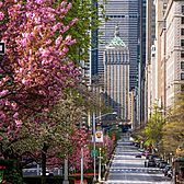 Park Avenue and Helmsley Building, Midtown, Manhattan