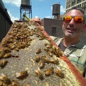 Beekeeper Turns Rooftops Into Buzzing Farms