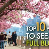 Top 10 Places To See NYC in FULL BLOOM