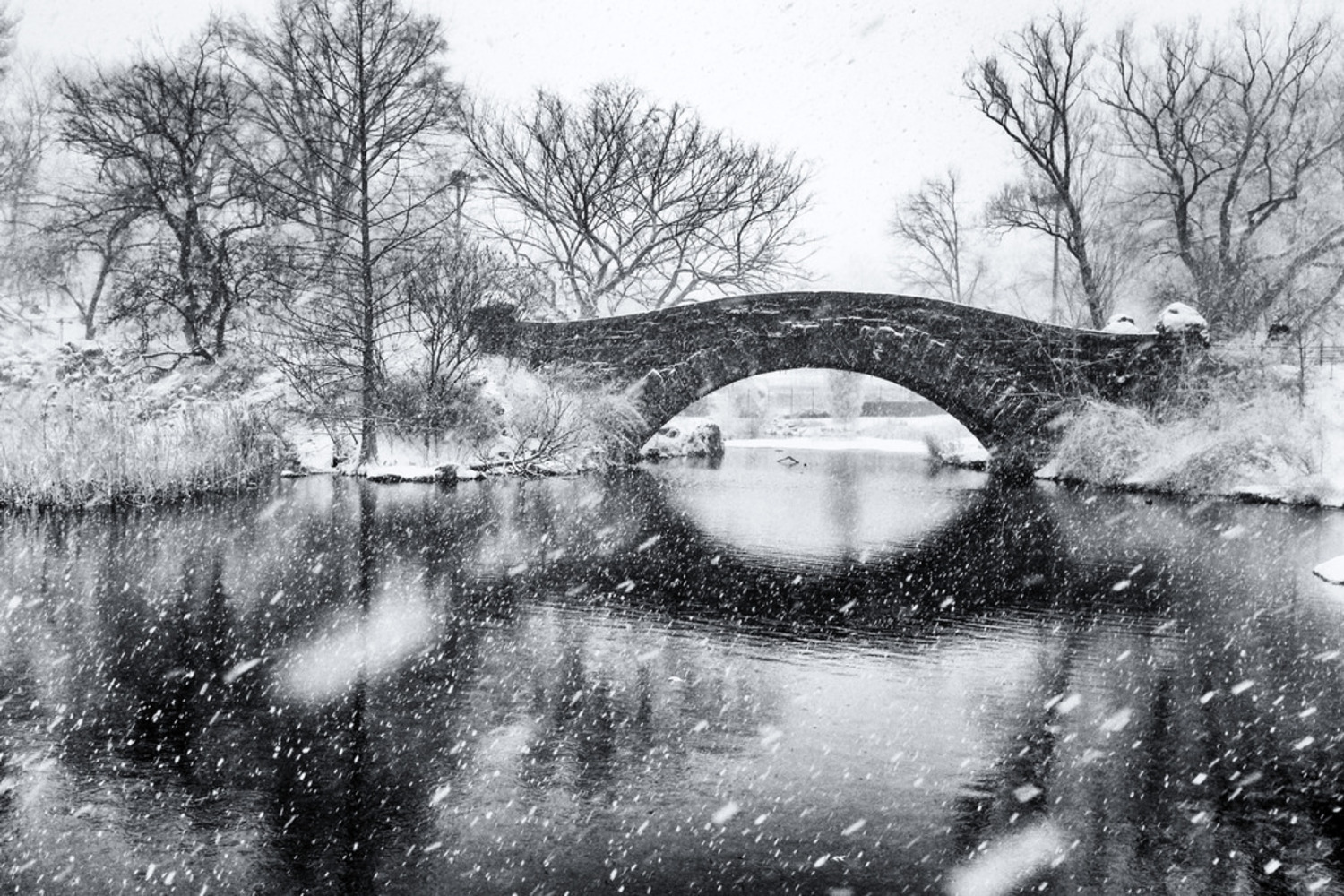 Snowing, Central Park | NYC