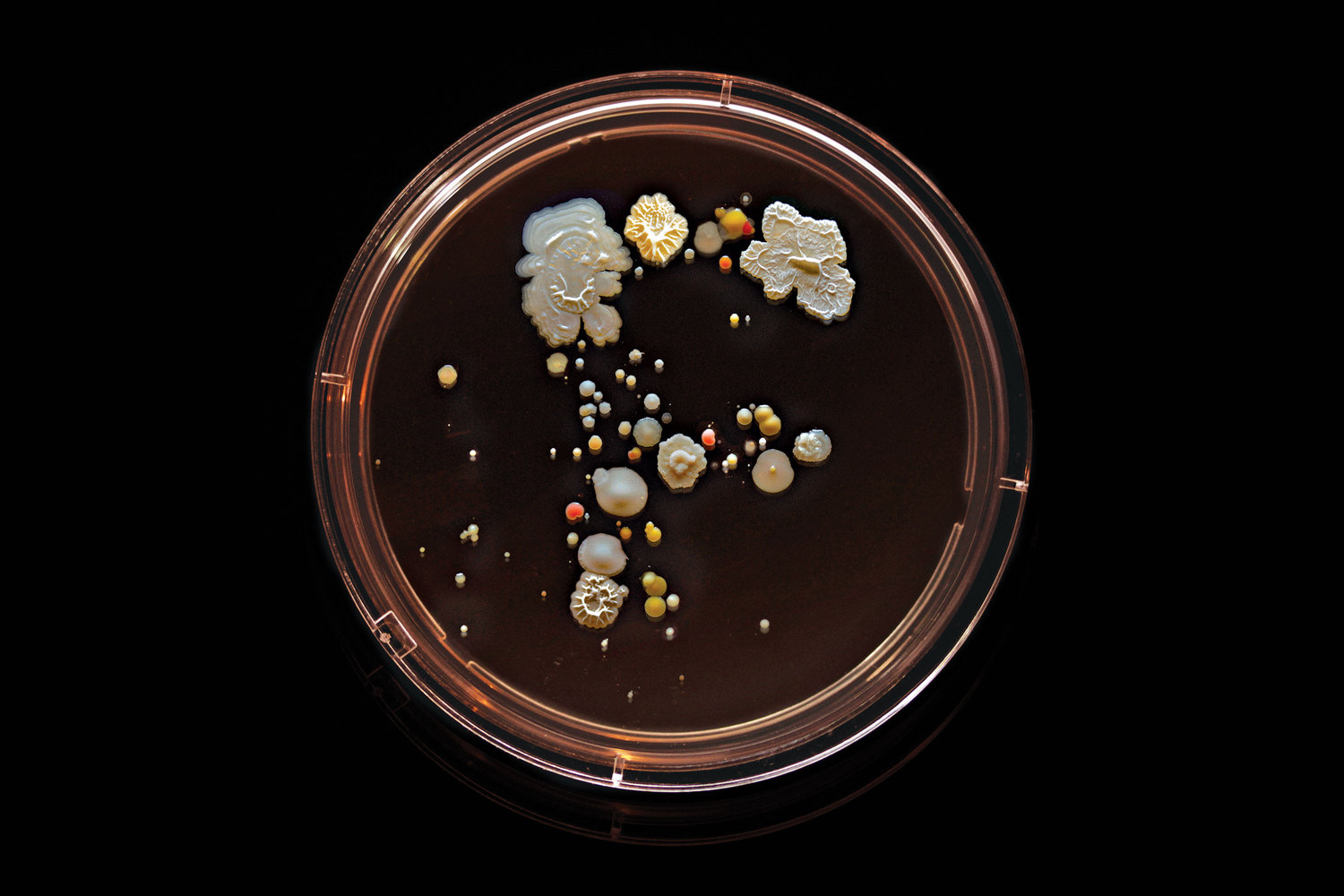 F Train: Contains E. coli, Micrococcus luteus, Bacillus subtilis