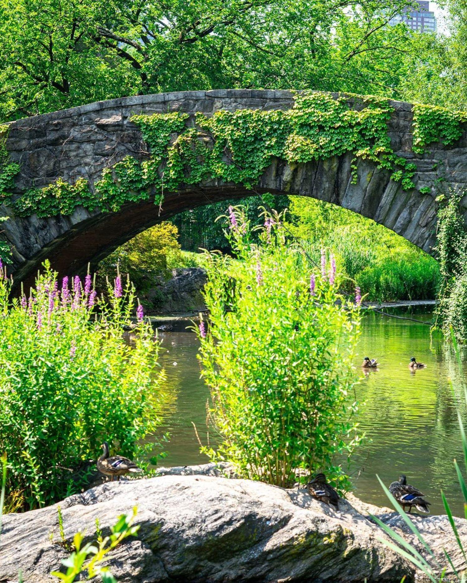 Gapstow Bridge, Central Park, Manhattan