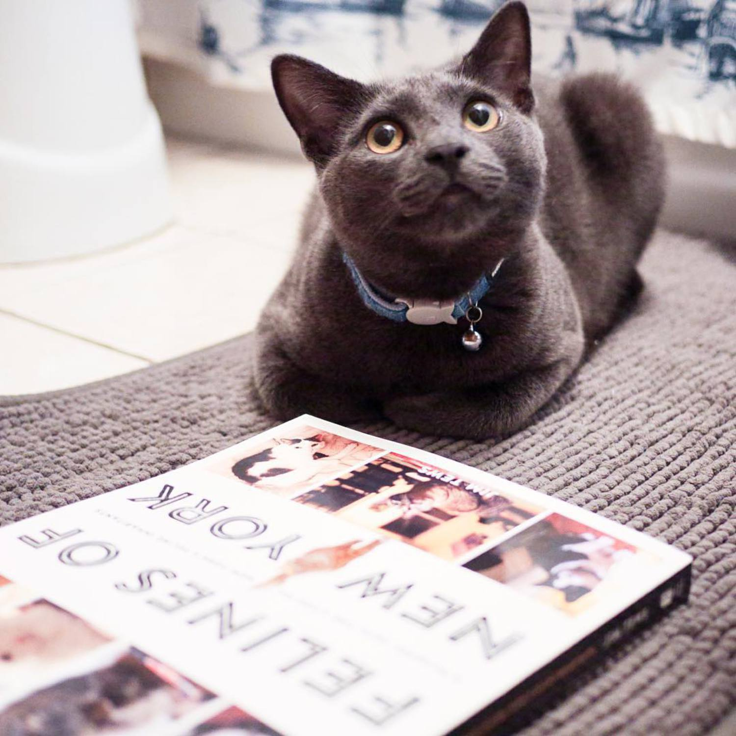 """I prefer to read my copy of Felines of New York in the people's bathroom, but you can read yours wherever."" - Arthur, Queens  Pre-order it now!