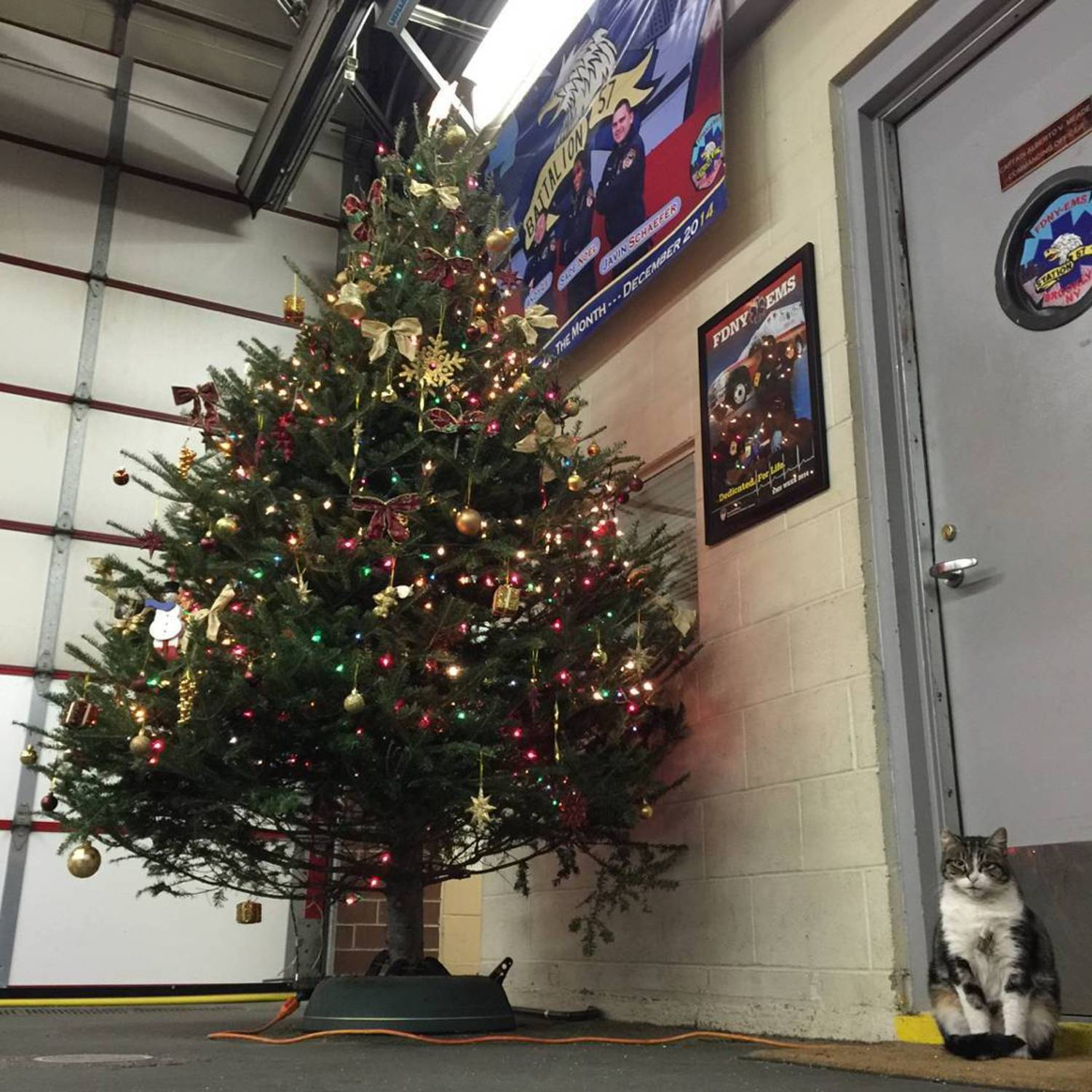 Today was our first annual Station 57 Toy Drive and the miniature humans got lots of presents but they left the best toys on the tree! For me. #busynightahead #liberatethetoys  #toysforkiller #christmastree #thiswillbearegulartreeintheam  #toydrive #station57 #ornamentfree57 #cats #catsandchristmastrees #cat #catsofinstagram #tabby #tabbiesofinstagram #fdny #fdnyems #tabbycats #stationcat #workingcats #catsatwork