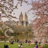 The Lake, Central Park, Manhattan