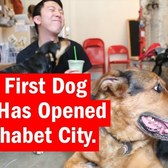 NYC's First Dog Cafe has Opened in Alphabet City