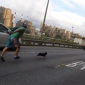 High-speed dog chase through the streets of New York