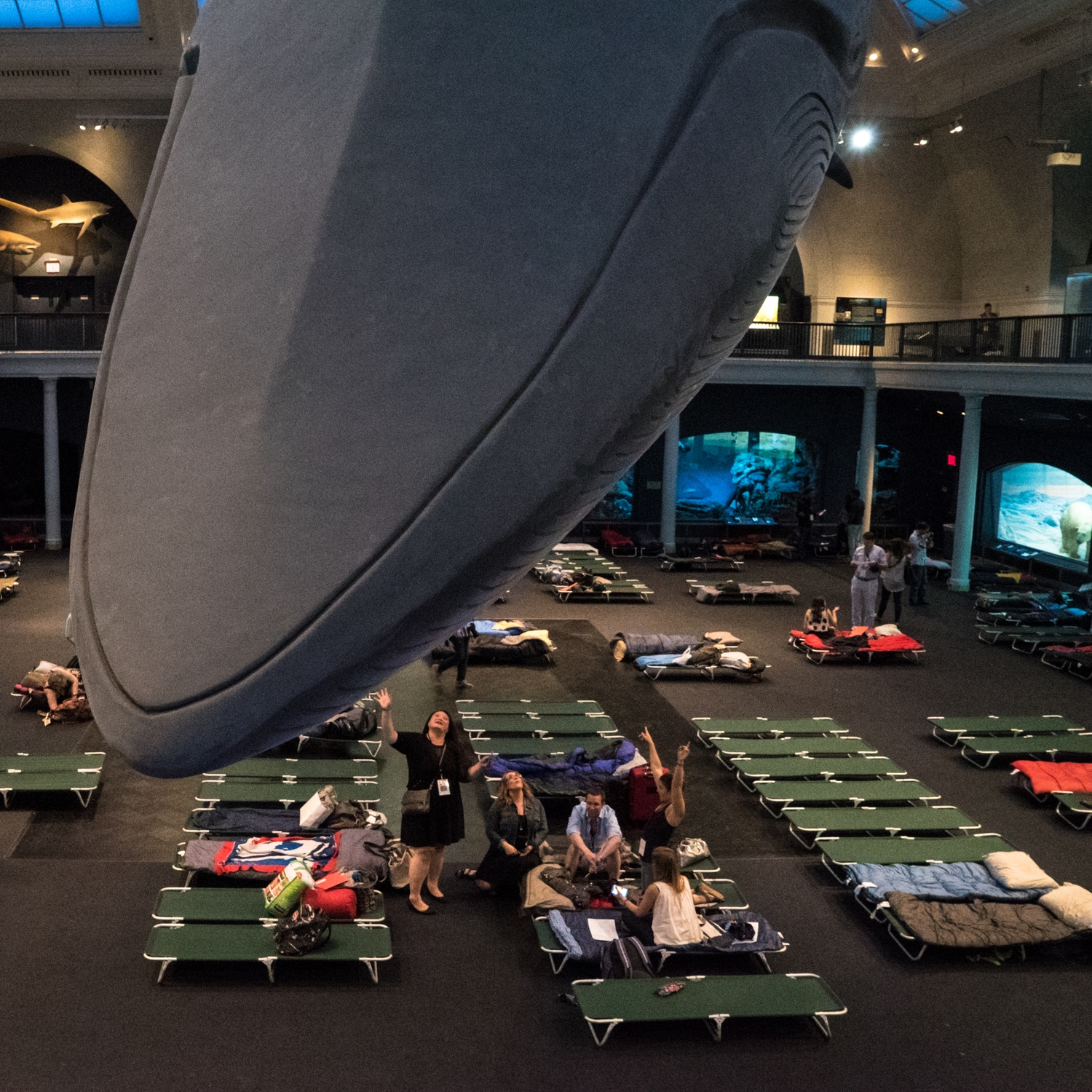 Museum of Natural History - Sleepover for Grownups -  Under the Whale