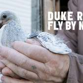 Creative Time Presents Duke Riley's Fly By Night