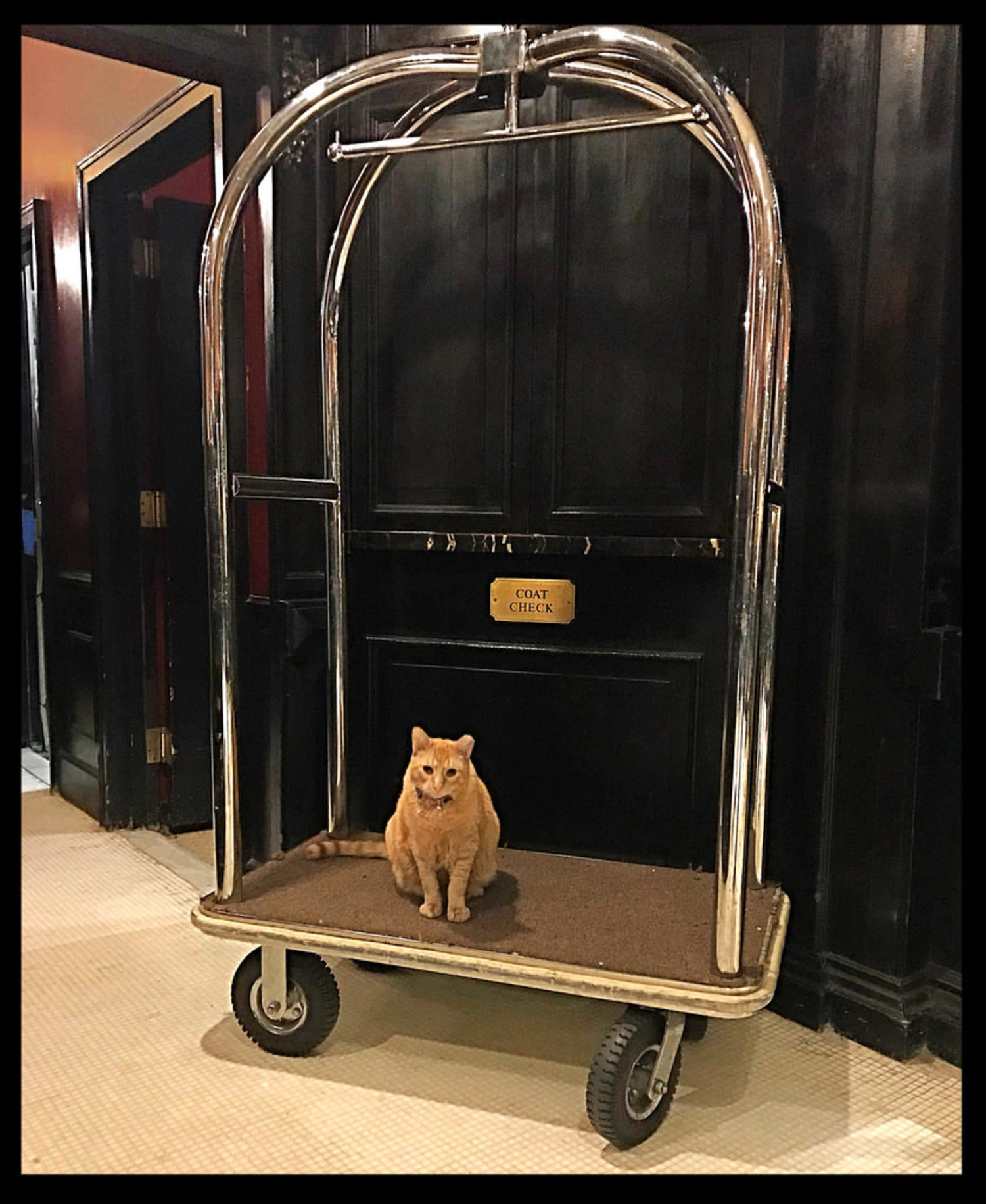 The Algonquin Hotel - New York City | Hamlet, the resident house cat