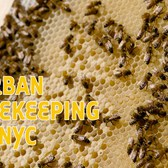 Watch NYC Beekeeper Tend To 50,000 Bees