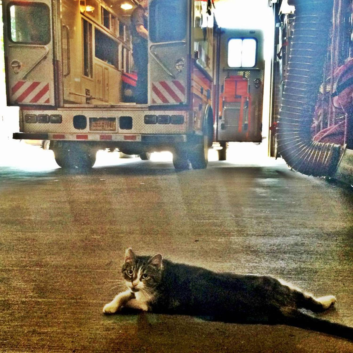 Thanks to @kellakazoo for making me a pop art celebrity as well. #art #catart #ambulance #rescuer #stationcat #nyc #savealife #catsinnewyorkcity #catsatworknyc #brooklyncats #artshots #kitty